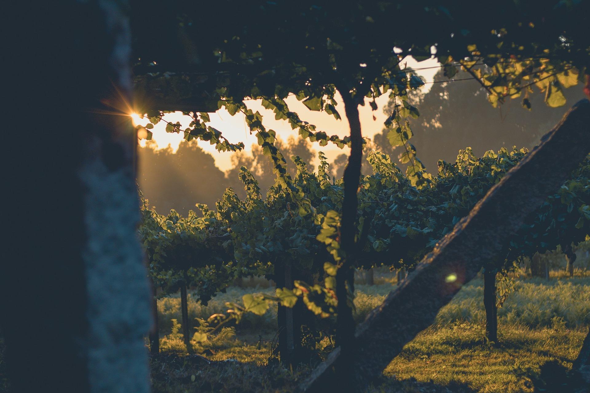 Todo lo que esconde el vino II