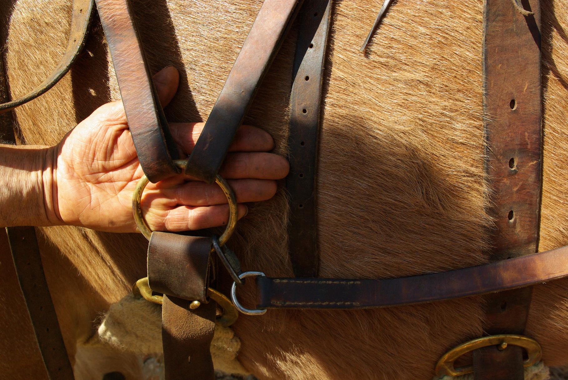 position du tapis de selle par rapport à l'anneau de sangle