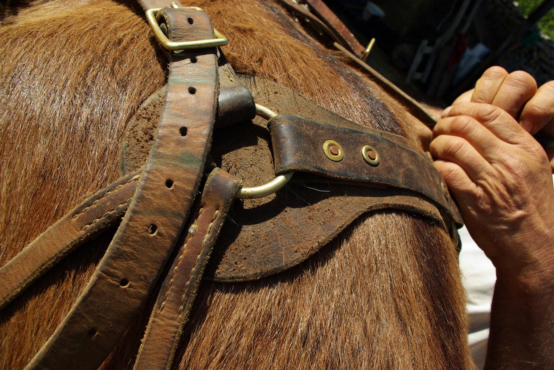noter la bande de cuir protectrice sous l'anneau de l'avaloire