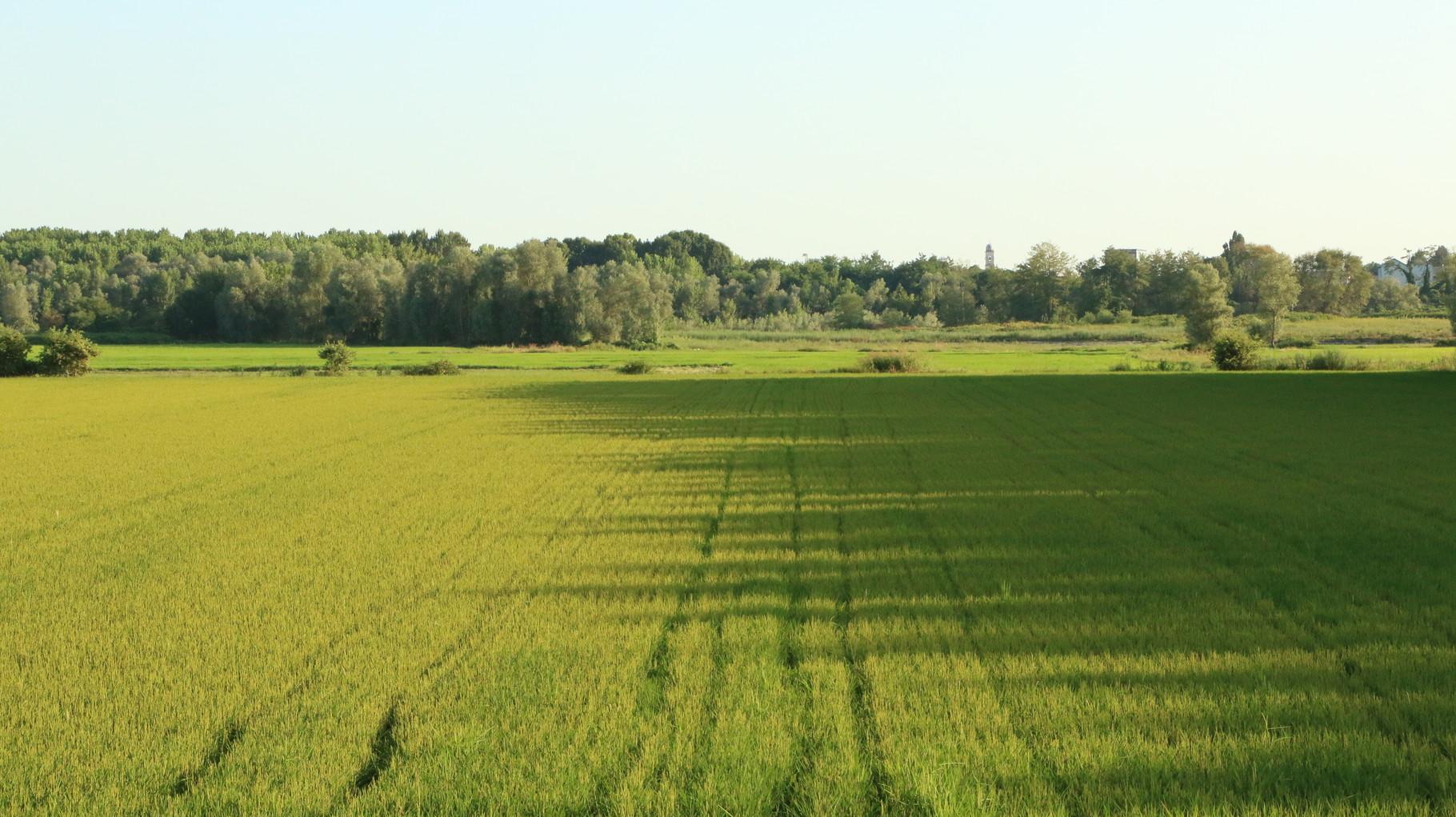 Tappa 14: Pavia - Santa Cristina | 27,9 km