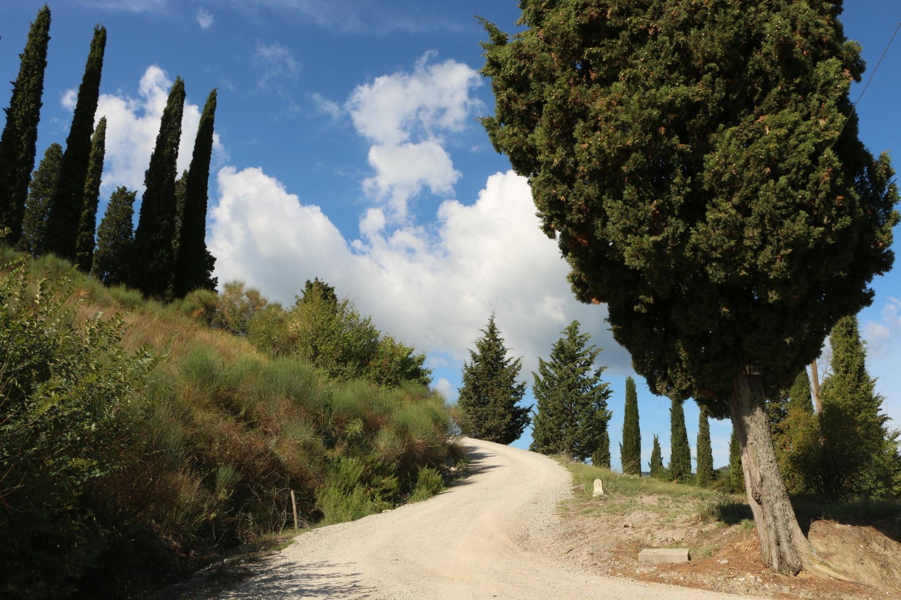 Tappa 29: San Miniato - Gambassi Terme | 24 km