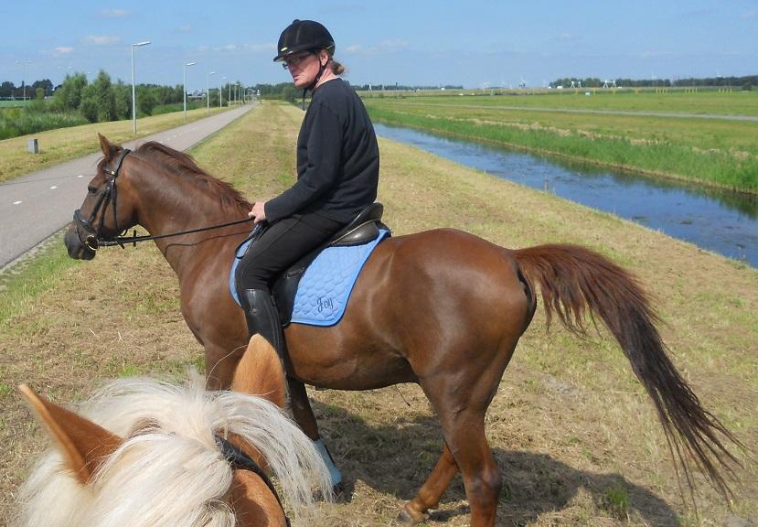 Paarden voorwaarts voor een hulp rijden