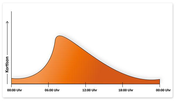 Der Kortisonspiege zeigt eine starke Tagesrhythmik und ist in den Morgenstunden am höchsten