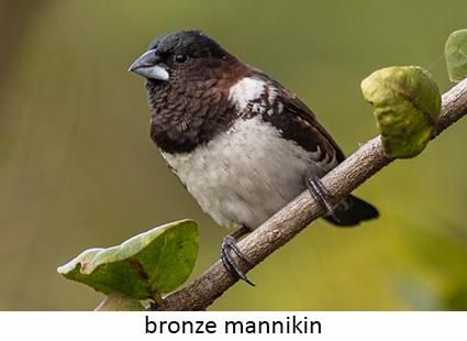 Bronze Mannikin