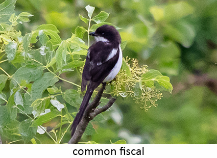 Common Fiscal
