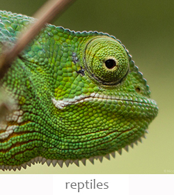 reptiles of Kenya