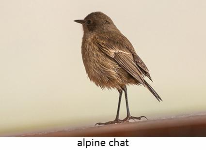 Alpine Chat