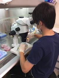 細胞培養室での細胞播種の様子