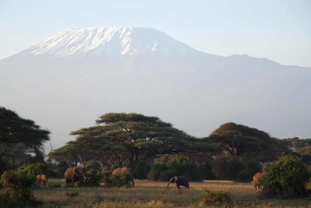 Elefantenherde vor dem Kilimanjaro