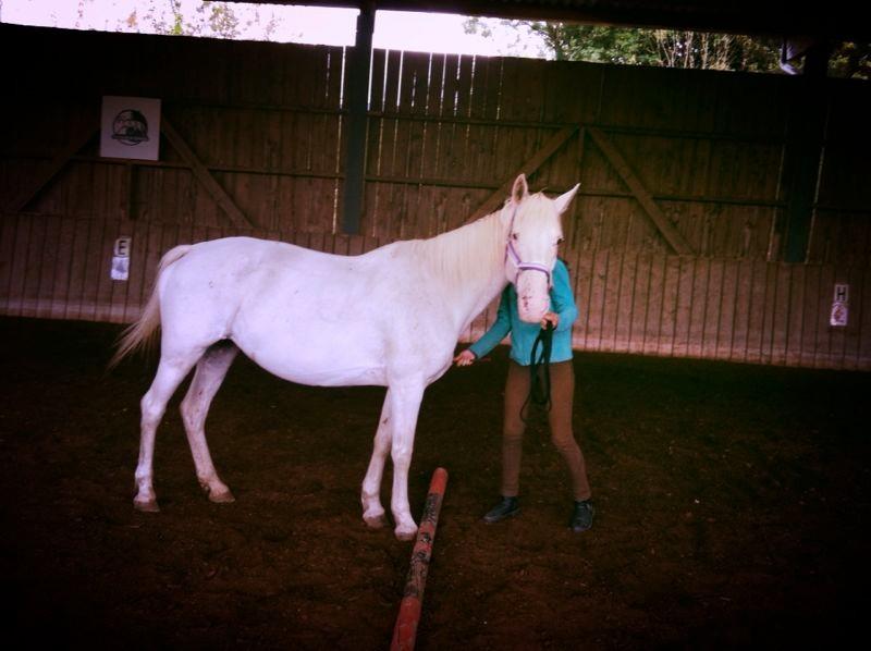 guider son cheval dans le parcours d'apprentissage