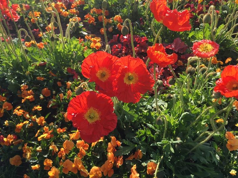 Blumen im Gartenbeet und Pflanzen pflegen