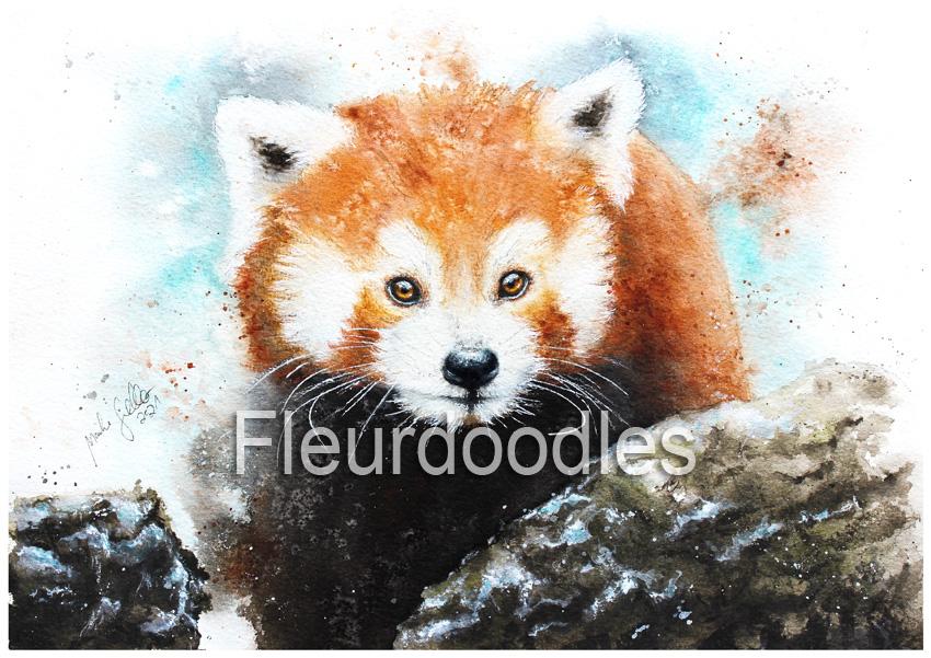 Roter Panda in Aquarell, ca. 21 x 30 cm