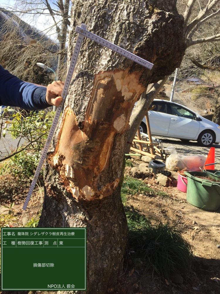 樹皮損傷部切除