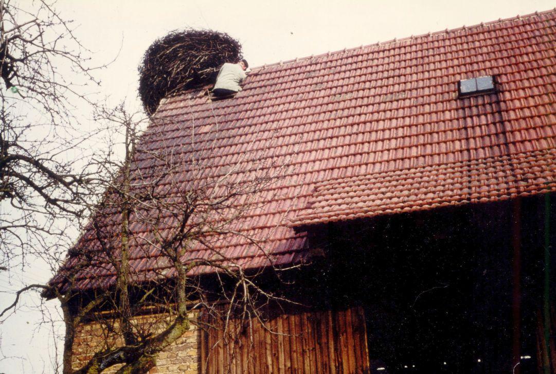 Das letzte Nest innerhalb des Ortes 1959