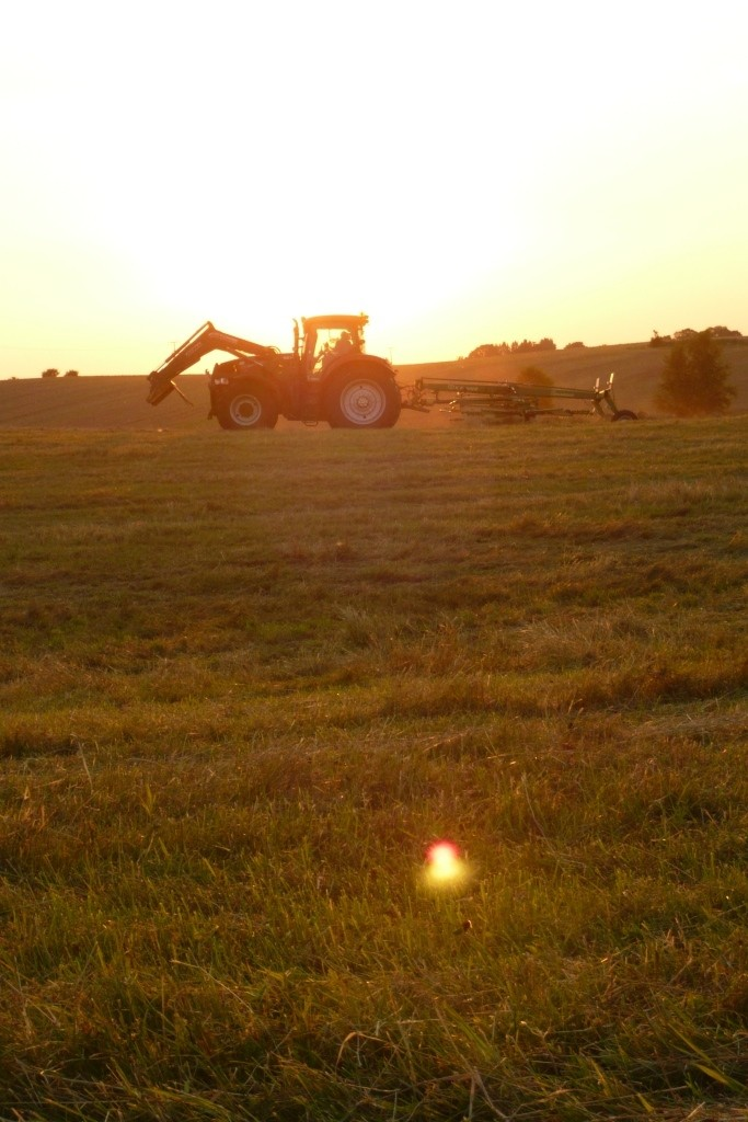 Arbeiten auf dem Feld beim Sonnenuntergang