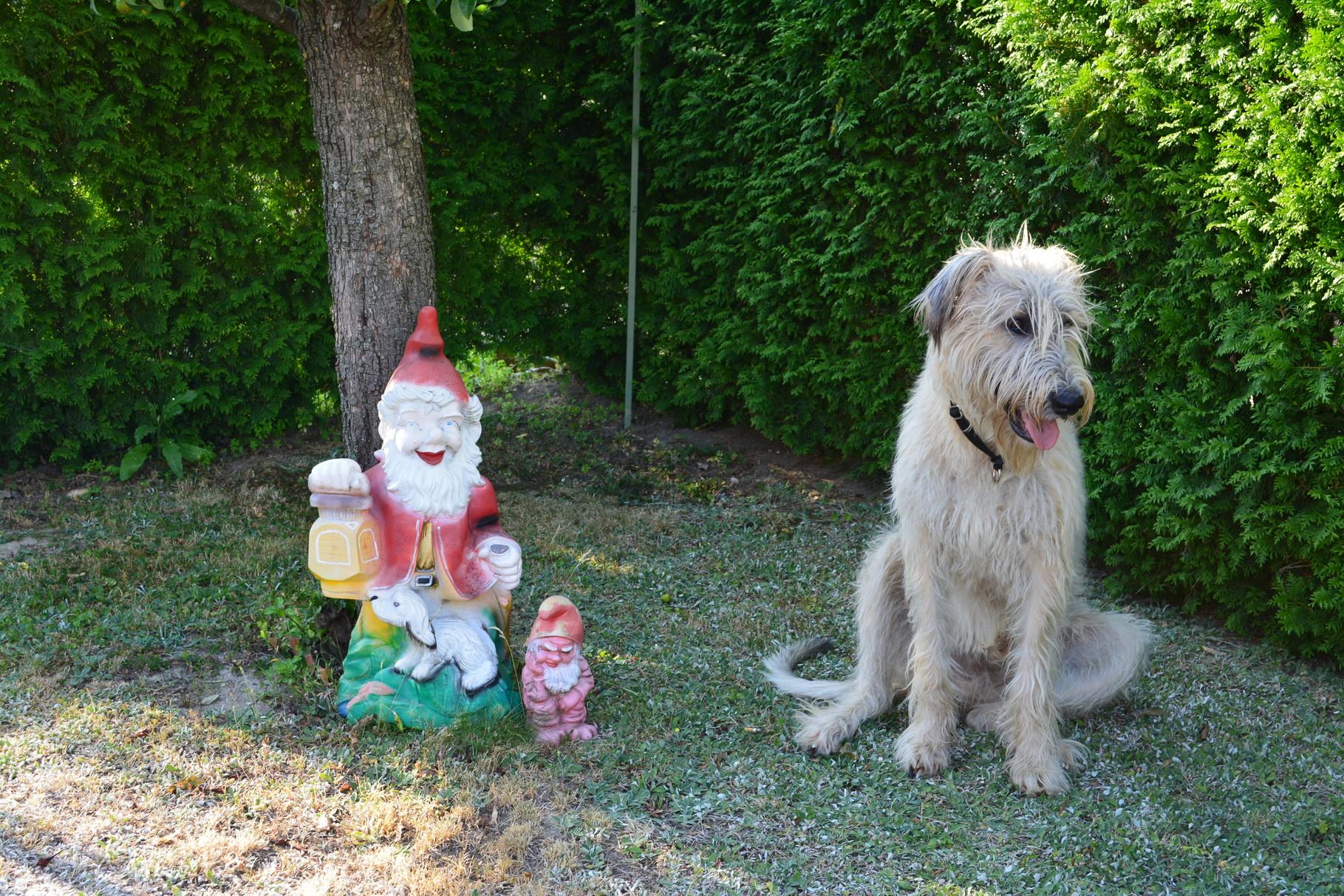 Zu Besuch beim Gartenzwerg von Fraulis Freundin