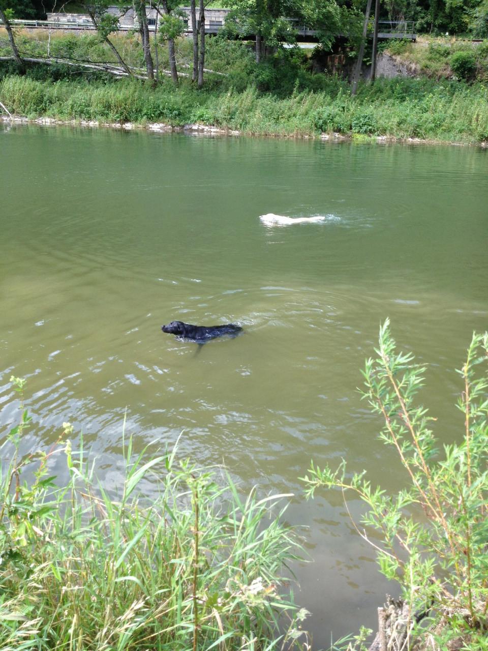 Erstes Schwimmen für Gaya und klappt gleich super gut. Hat es sich von Stella abgeschaut.