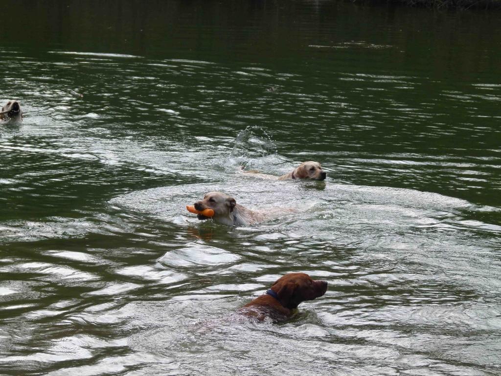 Figurenschwimmen ...