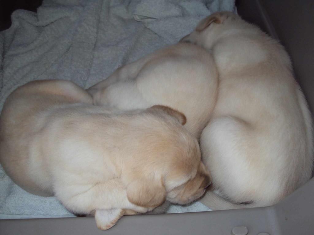 Mit meinen beiden anderen Blonden, Bijou und Balou, schlafe ich auch ganz gerne.