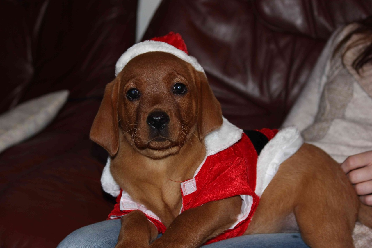 Hoho, heute ist Enya- äh Nikolaustag - sieht man es?