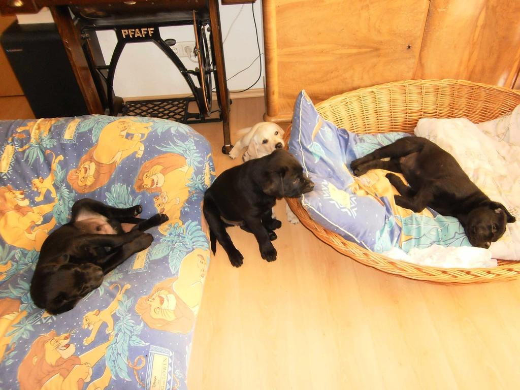 Dann erobern wir mal das Wohnzimmer und die Schlafplätze von Stella.