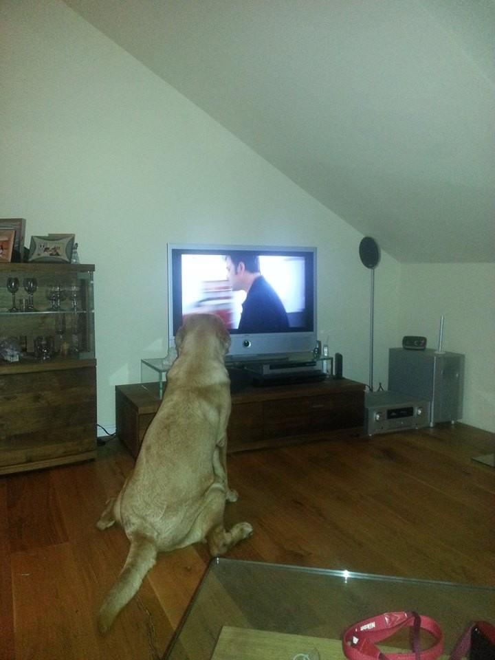 Meine Sendung - Der Hundeprofi mit Martin Rütter. Muss doch wissen, wie das mit der Erziehung meiner Herrchen geht.
