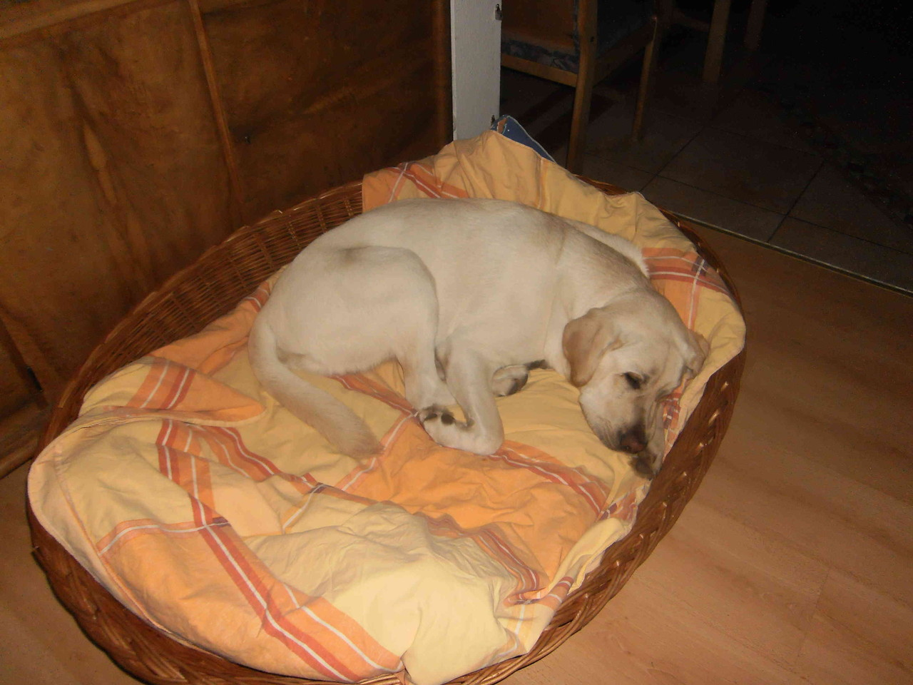 Weihnachten 2010: Ich darf wieder meine Mami für über 2 Wochen besuchen. In ihrem Körbchen fühle ich mich wie zu Hause.