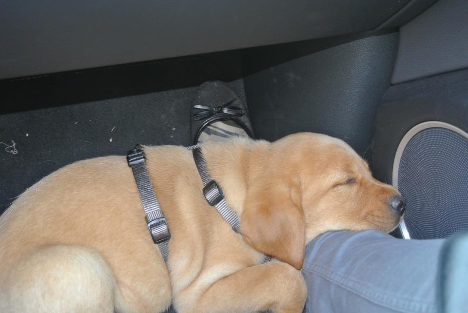 Nach so vielen Eindrücken bin ich labbimüde. Da schlaf ich sogar im Autofußraum. Ein toller Tag.
