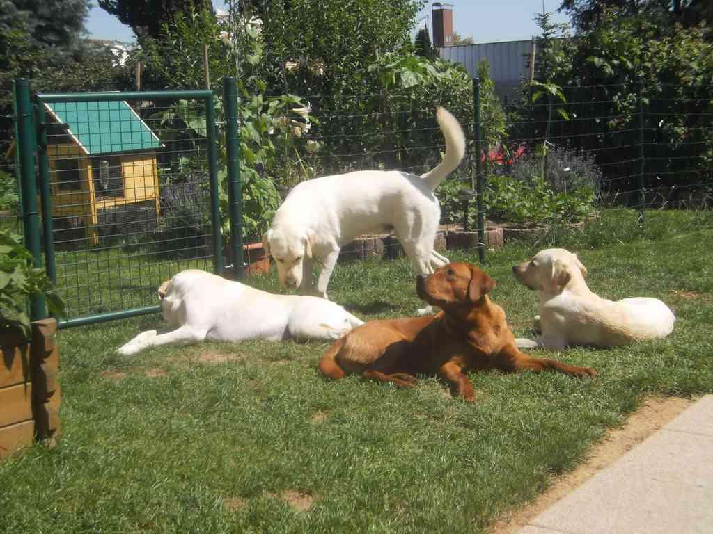 Sonntag, 26. Juni 2011: Jetzt relaxen wir zusammen im Garten.