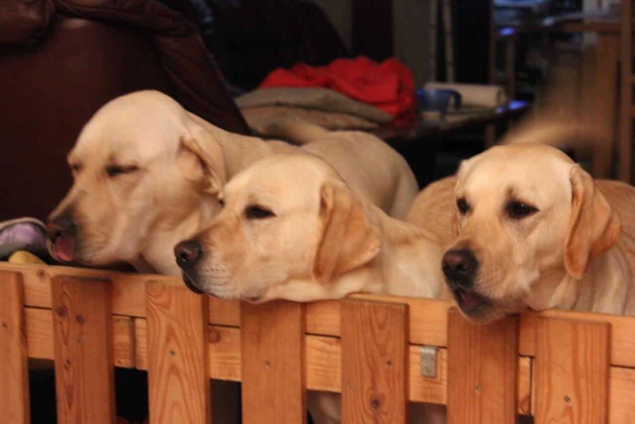 ... unter strenger Beobachtung der anderen - Amigo, Stella und Bounty.