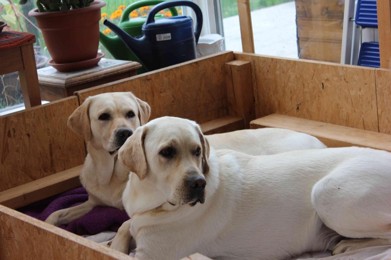 Hallöchen, das ist meine Wurfbox. Stella, Amigo - Platz da, jetzt komme ich.