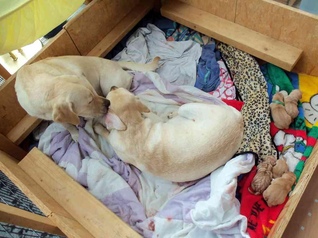 Oma Stella kümmert sich um ihre Tochter Bounty - 3 Generationen in der Wurfkiste.