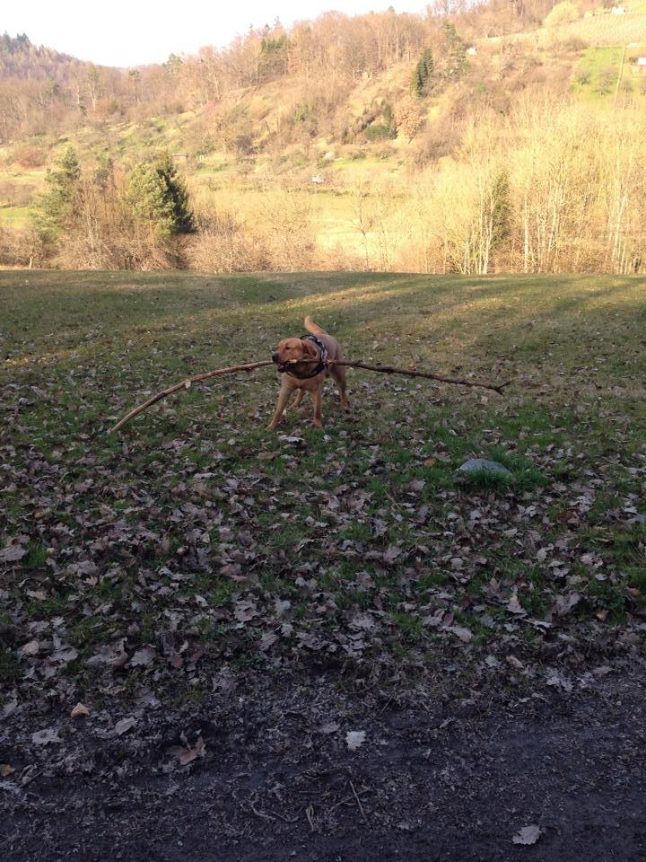 März 2014: Heute mal nur mit kleinem Stöckchen unterwegs. Fällt der Grillabend eben etwas bescheidener aus.