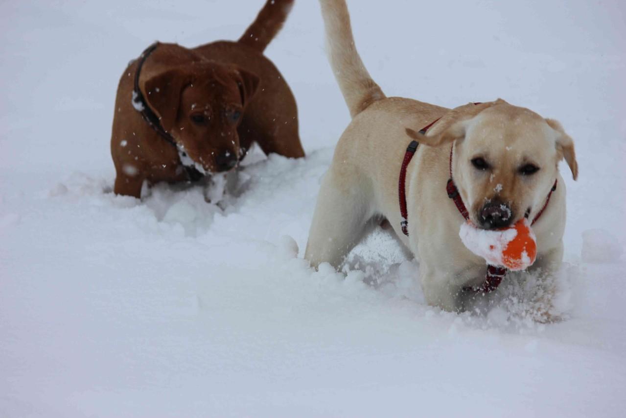 Summer und Bounty im Schneeparadies.