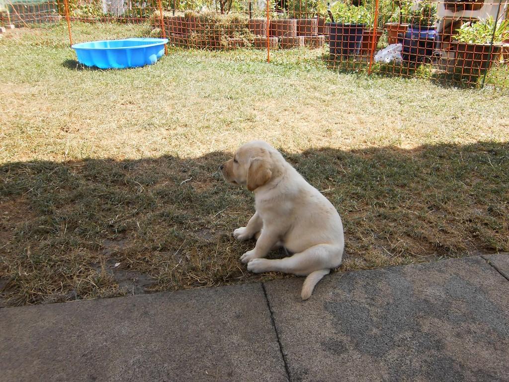 Nun bin ich schon 7 Wochen alt und kann schon ganz toll 'Sitz' machen.