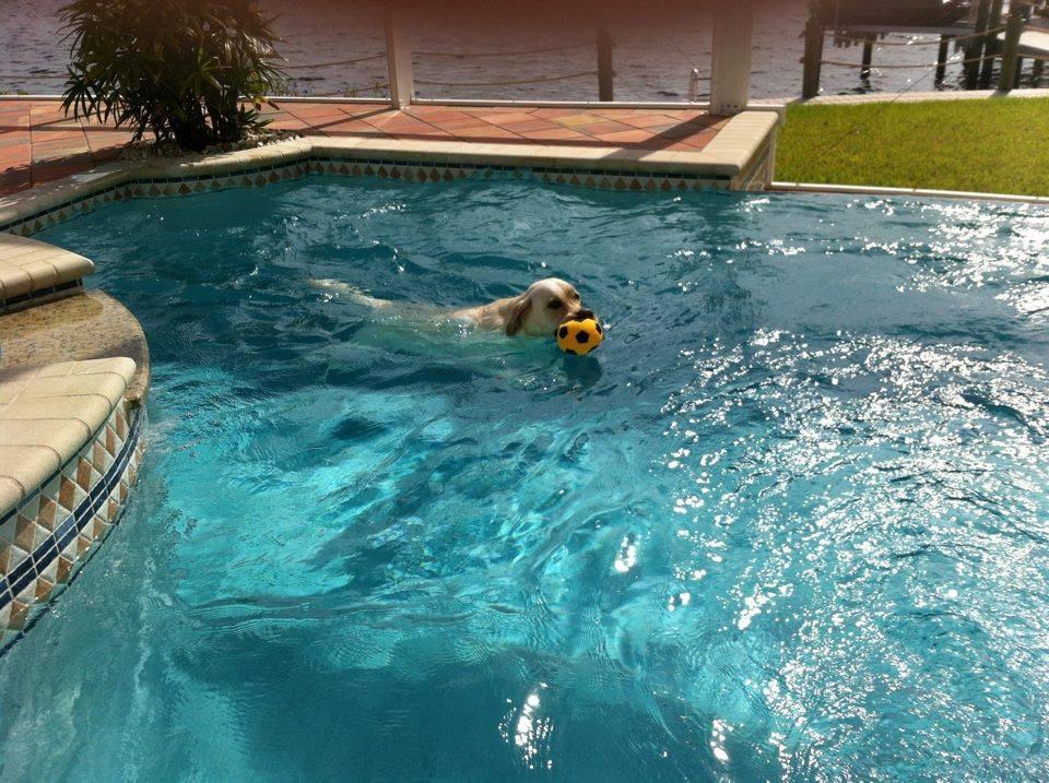 Das Pool-Leben ist einfach nur toll.