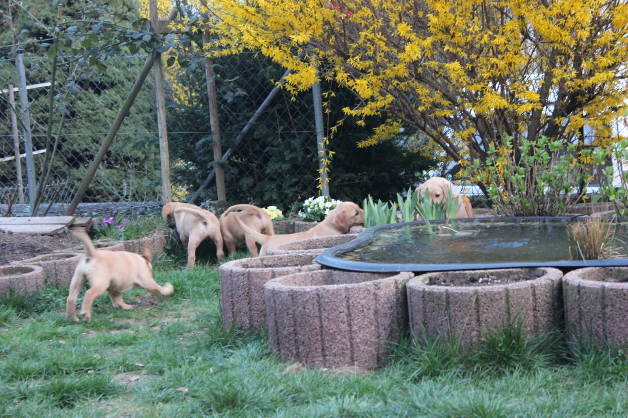 Letzter gemeinsame Ausflug im Garten, denn dieses Wochenende gehen fast alle zu ihren Familien.