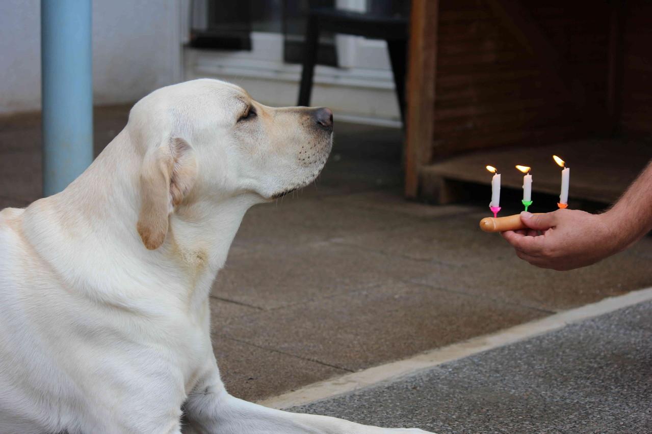 11. September 2012 - 3. Geburtstag vom A-Wurf und ...
