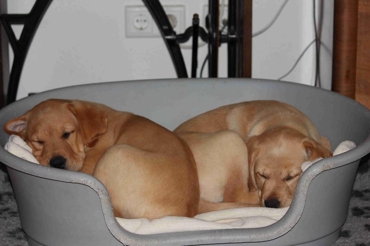 Danach waren wir sehr müde.