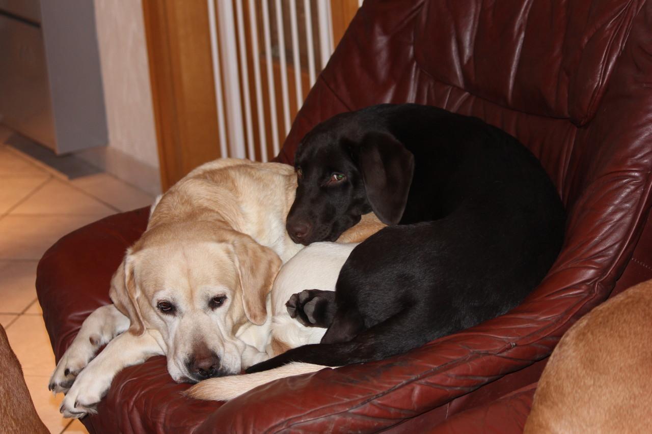 Rocky und Stella