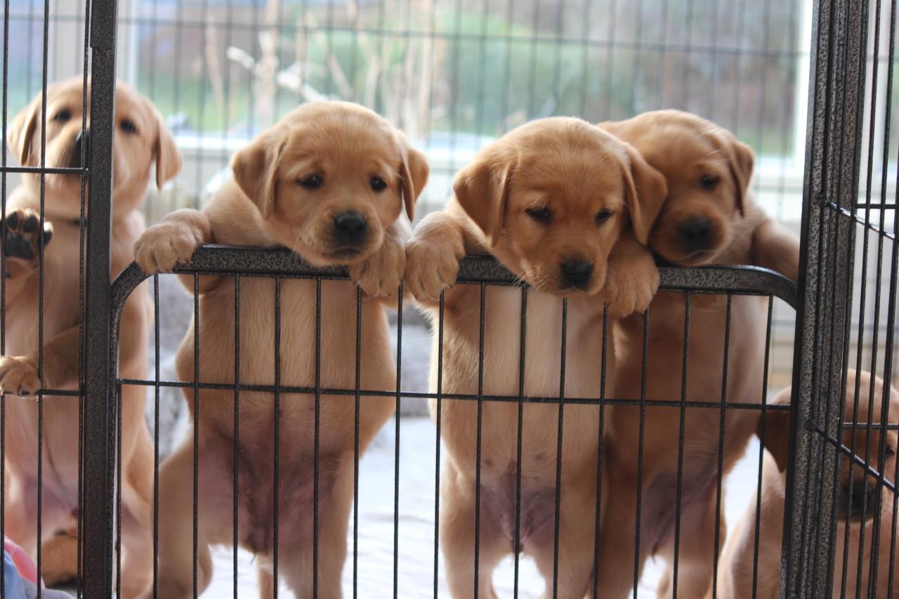 Wir wollen hier raus!