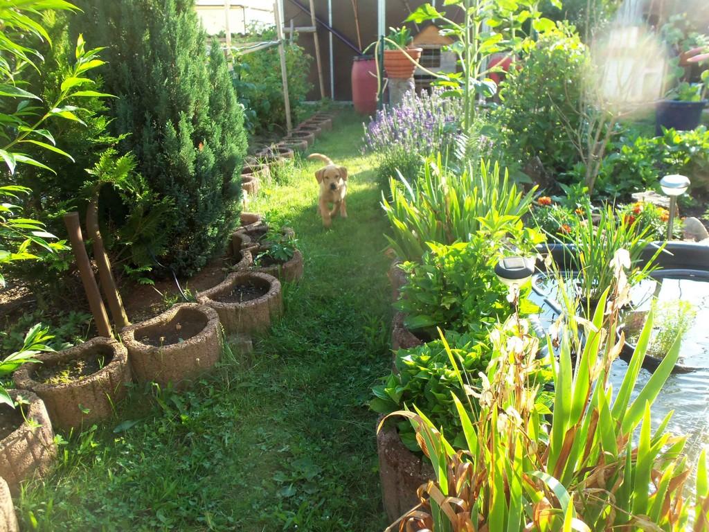 Den Garten hinter dem Zaun haben wir nun auch erobert.