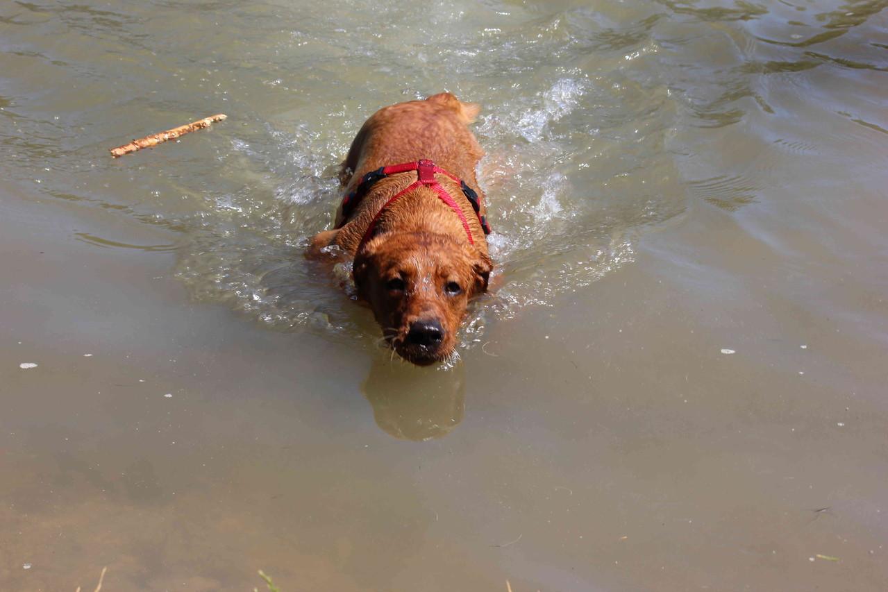 Erstes Mal Schwimmen ...