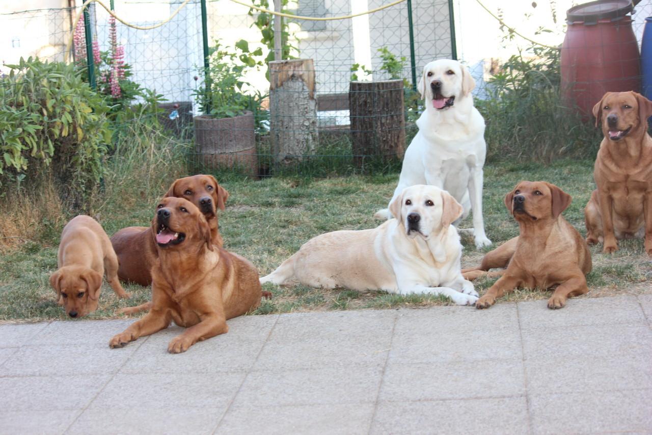 Zusammen mit der ganzen Hundebande
