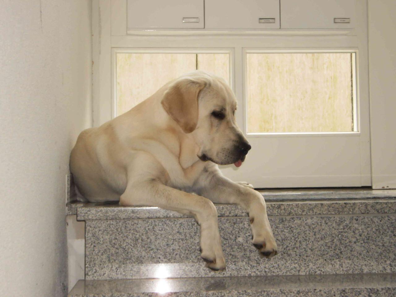 Amigo besucht mich im Juli 2010 für 3 Wochen.