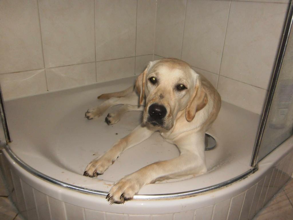 Ich suhle mich immer mit Absicht im Schlamm, dann werde ich geduscht - das ist herrlich. Und freiwillig bekommt man mich nicht mehr aus der Dusche.