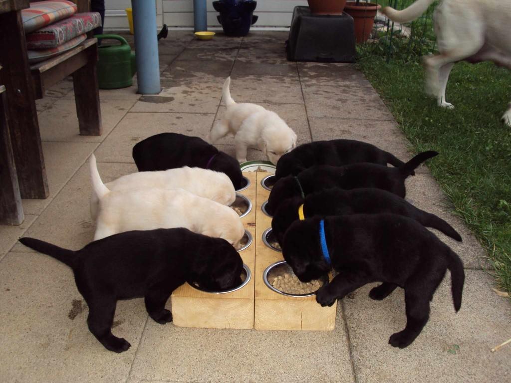Die Essenstafel ist gerichtet. Nun sind wir alle versammelt zum gemeinsamen Abendessen.