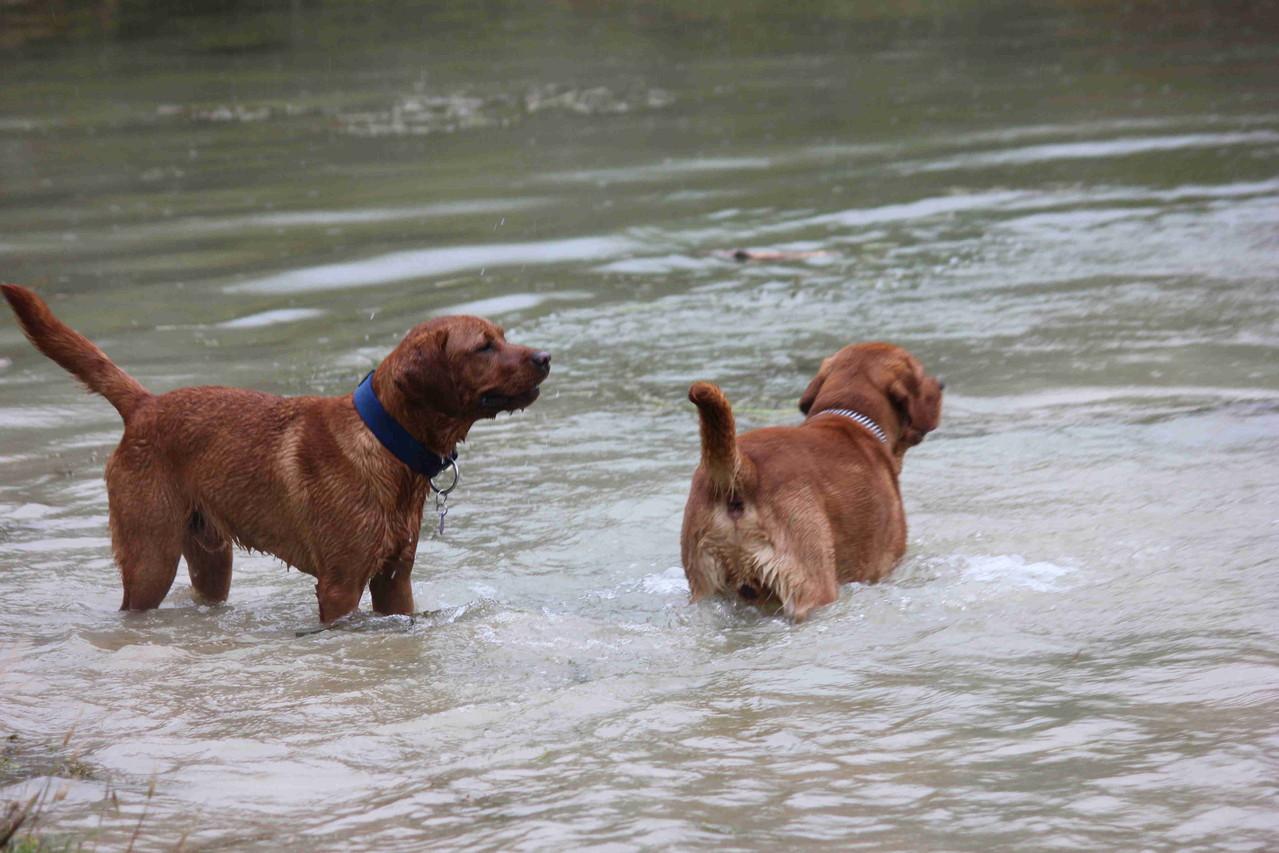 Arthur und Leo I.