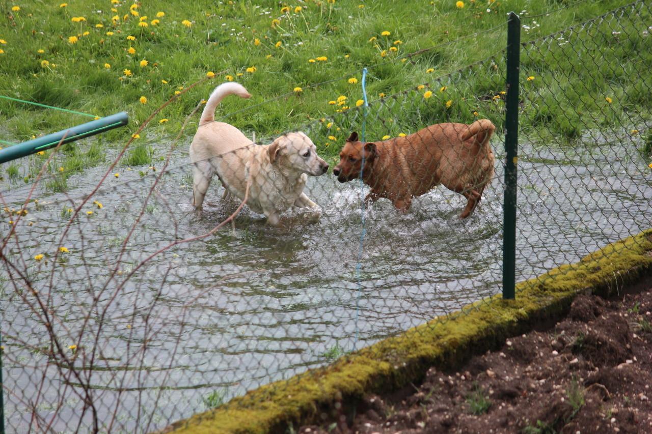 Stella und Summer nehmen auch ein Bad.