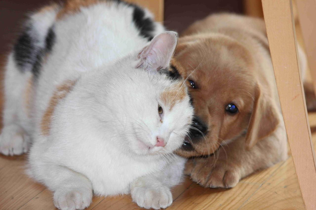 Auch ein Kätzchen wird im Rudel integriert.